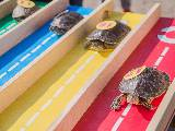 Course de tortues