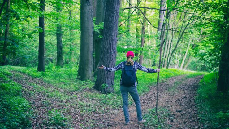 Perdue dans la forêt