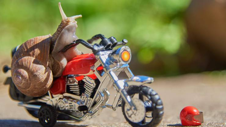 Escargot moto