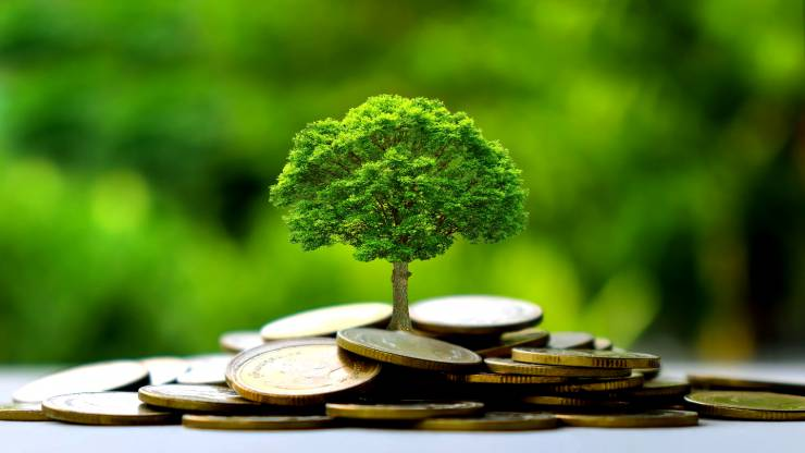 arbre sur des euros