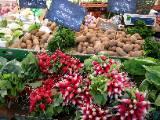 Radis patates